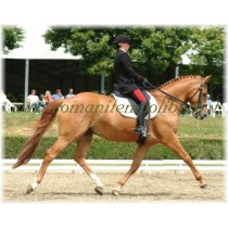 Sella Wintec Dressage Isabell Werth -Selleria Romani tempo libero - Selleriainternet.it